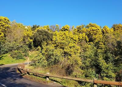 enTractTour route du mimosa